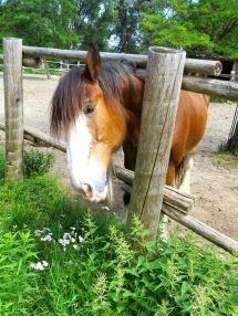 Horse - PleinAirTO2014