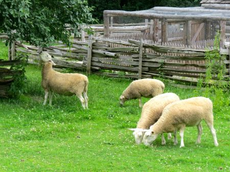 Sheep at Work - PleinAirTO2014