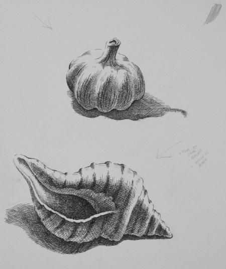 Pen and Ink – Natural Forms at DVSA
