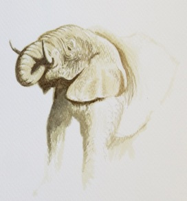 Elephant study by Barry Coombs