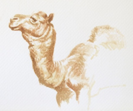 Camel study by Barry Coombs