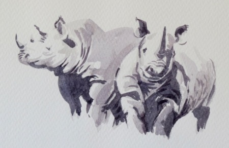 Rhinoceroses study by Barry Coombs