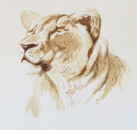 Lioness study by Barry Coombs