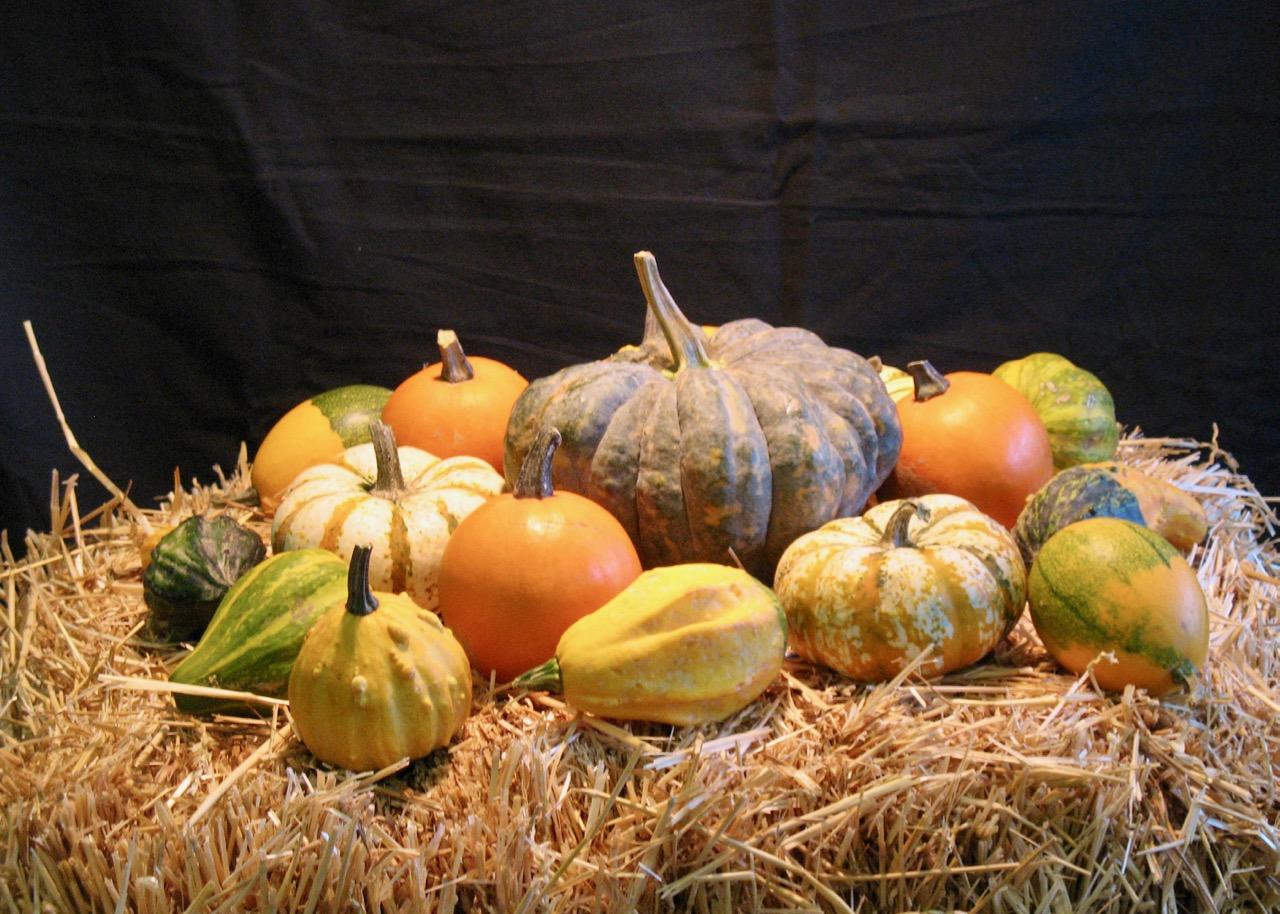 fall tuesday watercolour class more gourds barry coombs art rh barrycoombs wordpress com