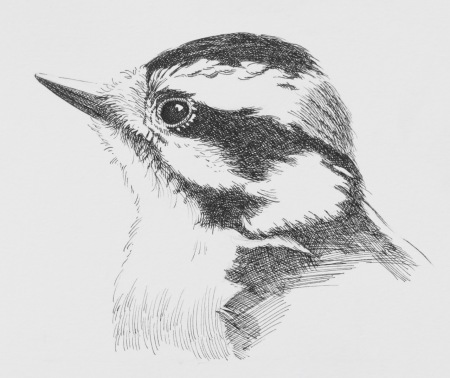 Pen And Ink Drawing | Barry Coombs Art Workshops